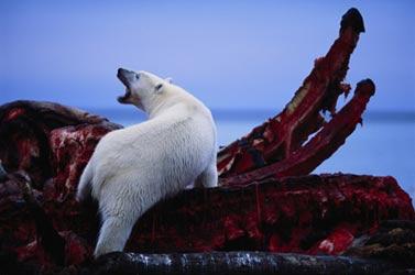 foto di Joel Sartore - copyright National Geographic