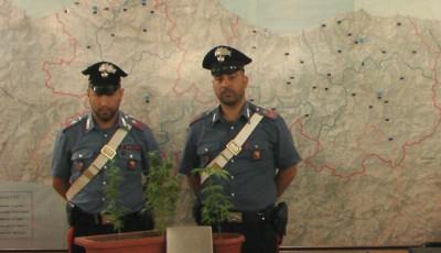 I Carabinieri di Monreale con le piante sequestrate