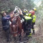 Ultime Notizie: Campo Calabro. Cavalla scivola in una scarpata per 500 metri, salvata dai Vigili del Fuoco