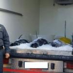 Ultime Notizie: Rossano. Guardia di Finanza sequestra 150 Kg di tonno rosso