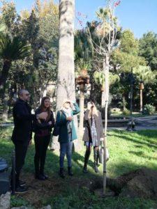 Dieci nuovi nuovi alberi piantati alla Villa Comunale di Reggio Calabria per la Festa degli Alberi 2017 2